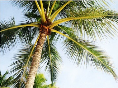 Digital Nomad Lifestyle under Palm Trees